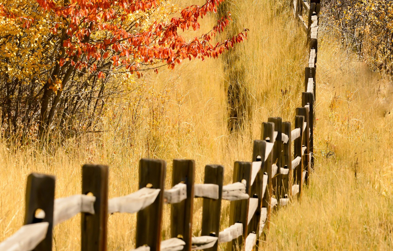 Photo wallpaper autumn, nature, the fence