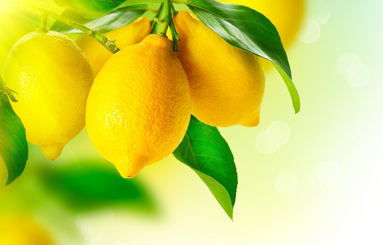 Photo wallpaper leaves, macro, yellow, lemon, fruit