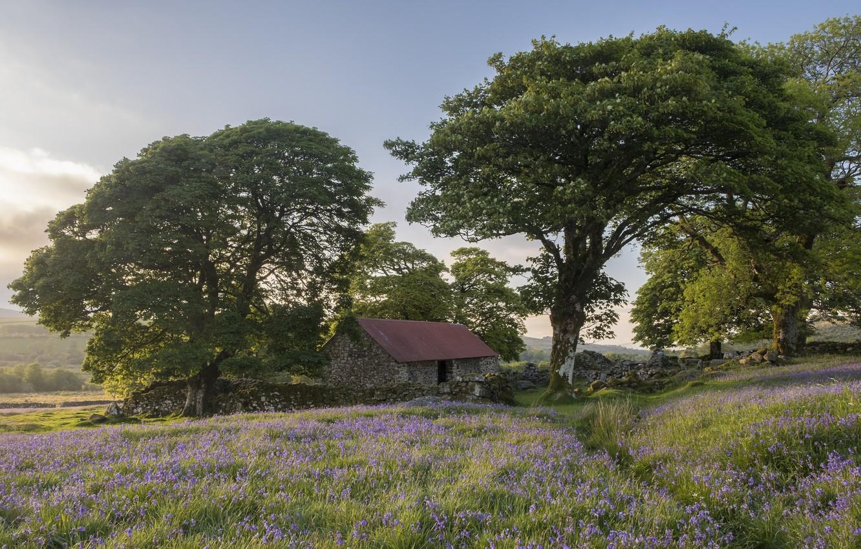 Photo wallpaper trees, England, the barn, Devon