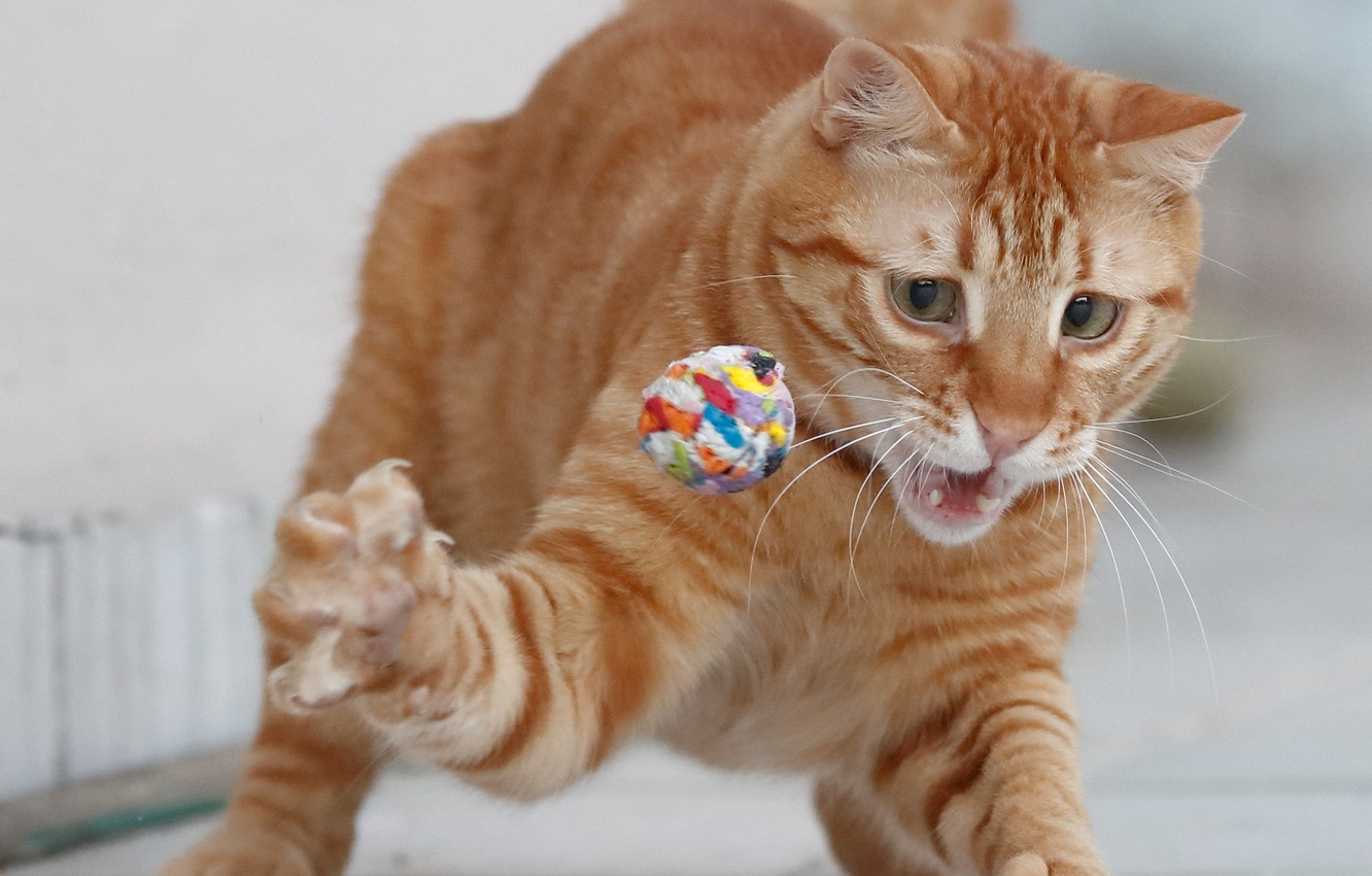 Photo wallpaper cat, the game, red, the ball, foot, red cat