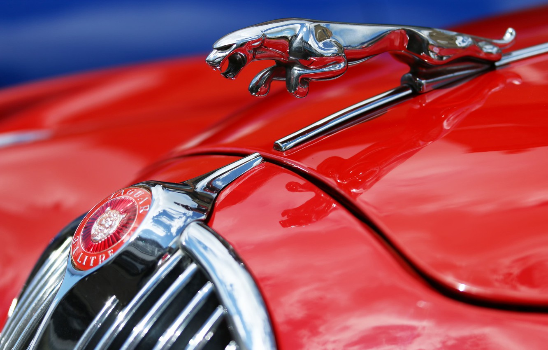Photo wallpaper macro, red, Jaguar, Jaguar MK2