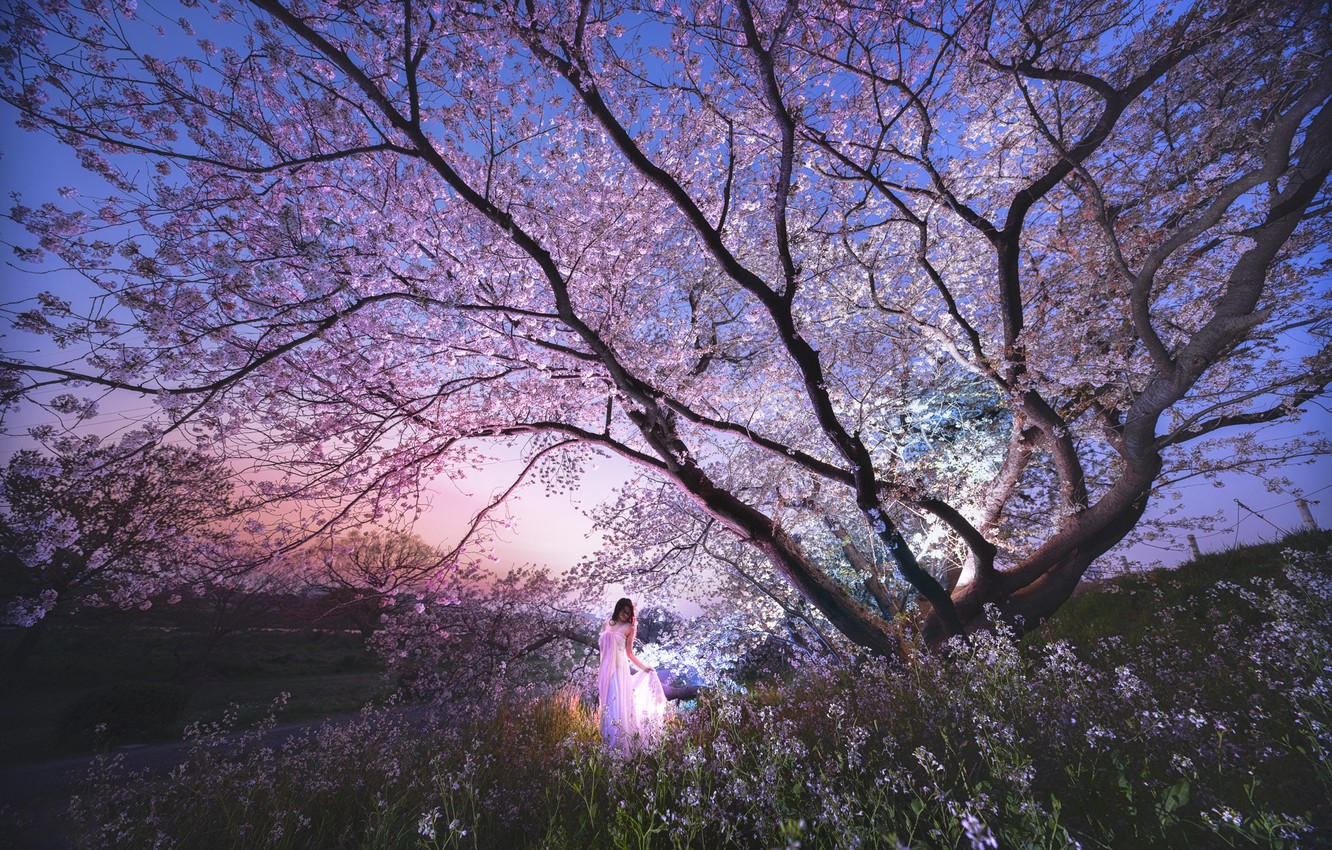 Photo wallpaper the sky, girl, light, landscape, flowers, night, branches, cherry, pose, Park, tree, mood, beauty, spring, …