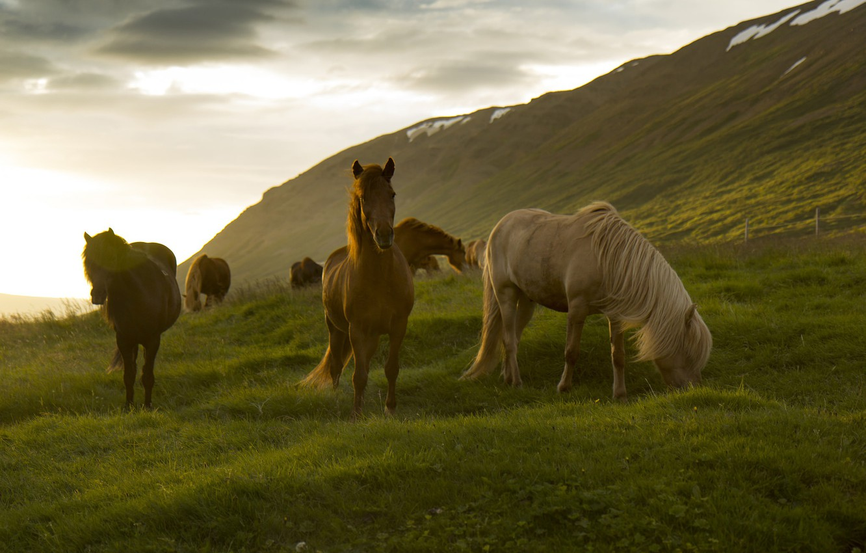 Photo wallpaper horse, large, mane, color