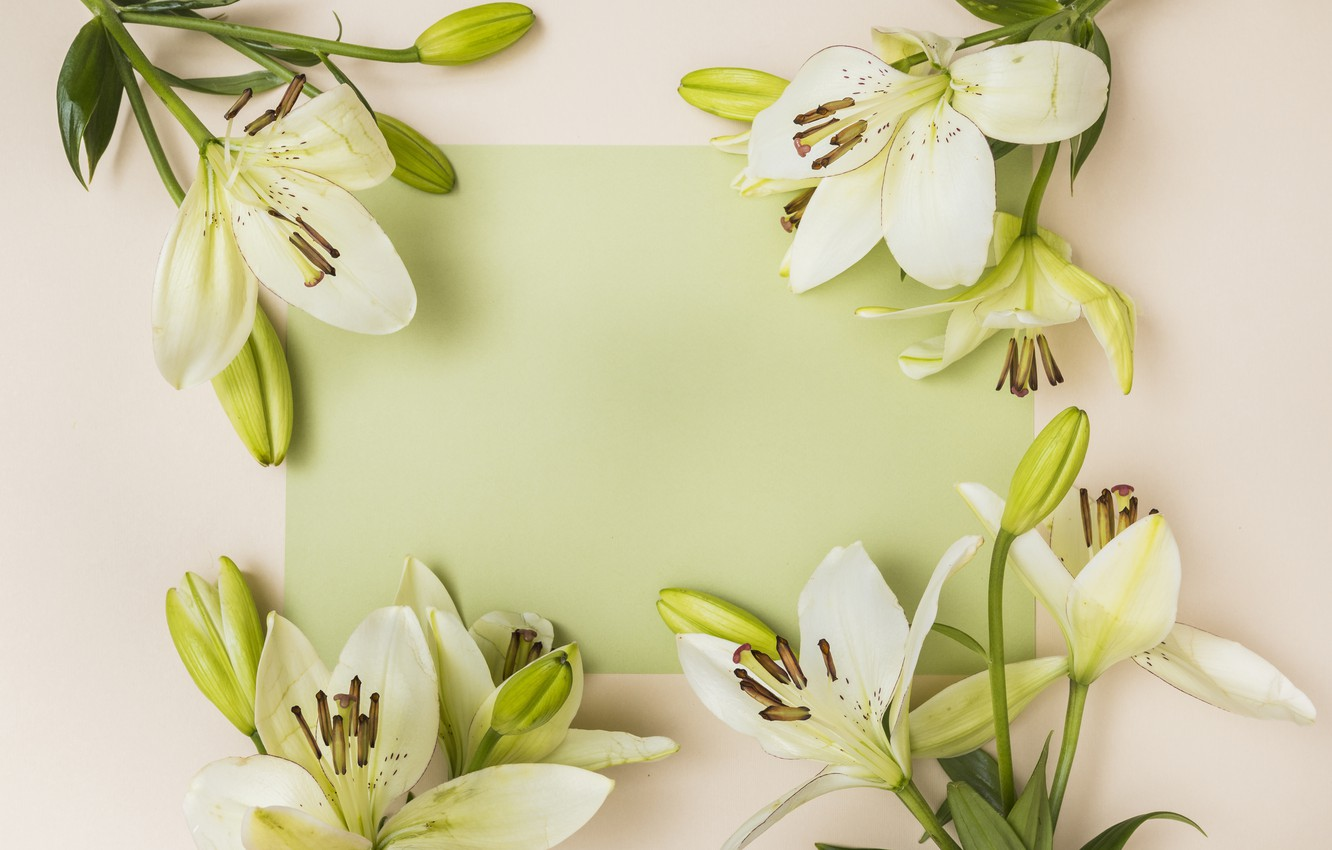 Photo wallpaper flowers, white, buds, Lily