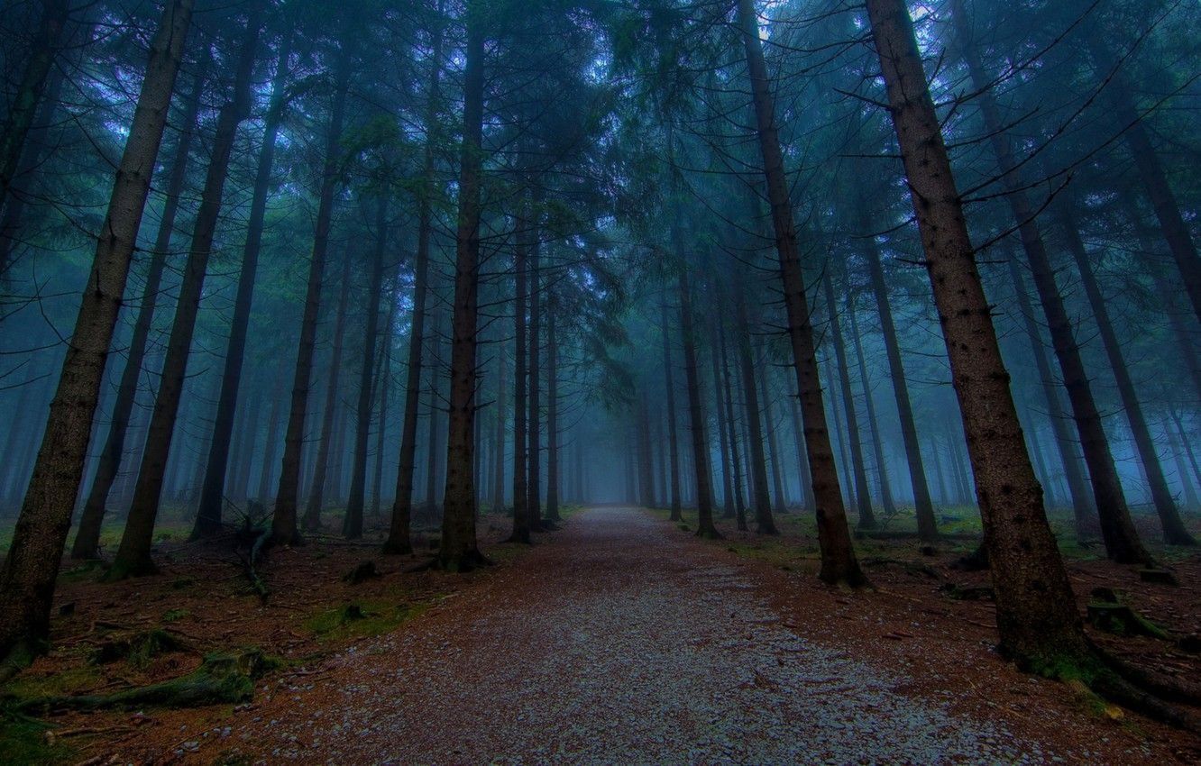 Photo wallpaper forest, fog, twilight, ate, road in the forest, spruce forest, fog in the forest, evening …
