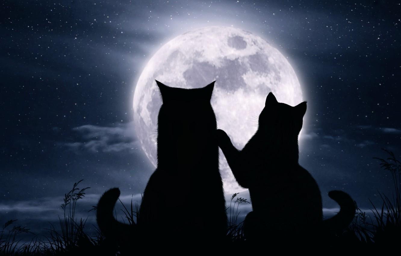 Photo wallpaper cats, night, the moon, romance, stars