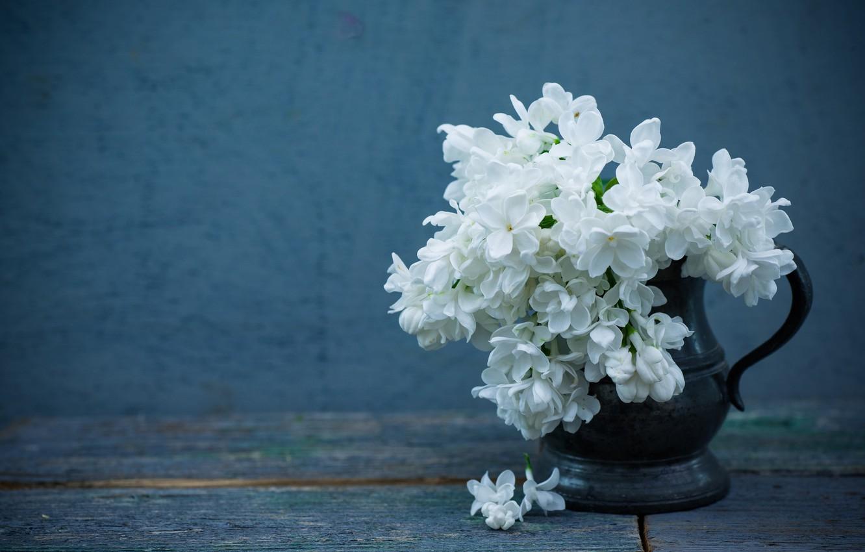 Photo wallpaper background, lilac, white lilac