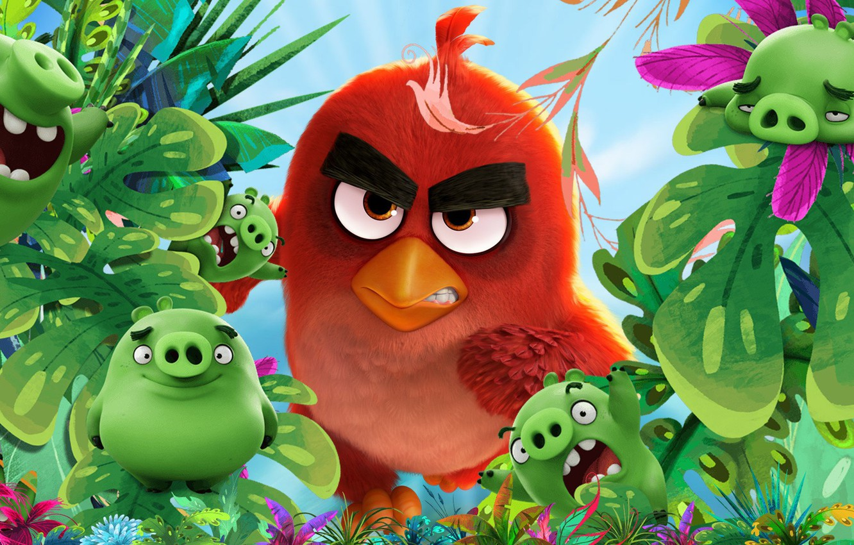 Wallpaper Cinema Red Bad Bird Movie Film Animated Film Angry