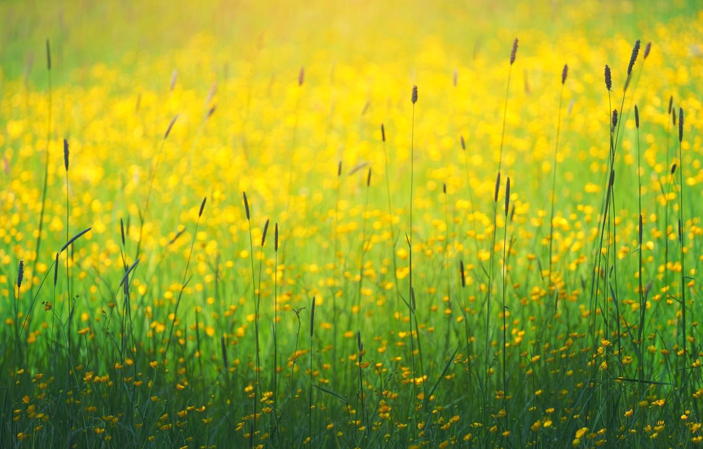 Photo wallpaper field, summer, grass, flowers, bokeh