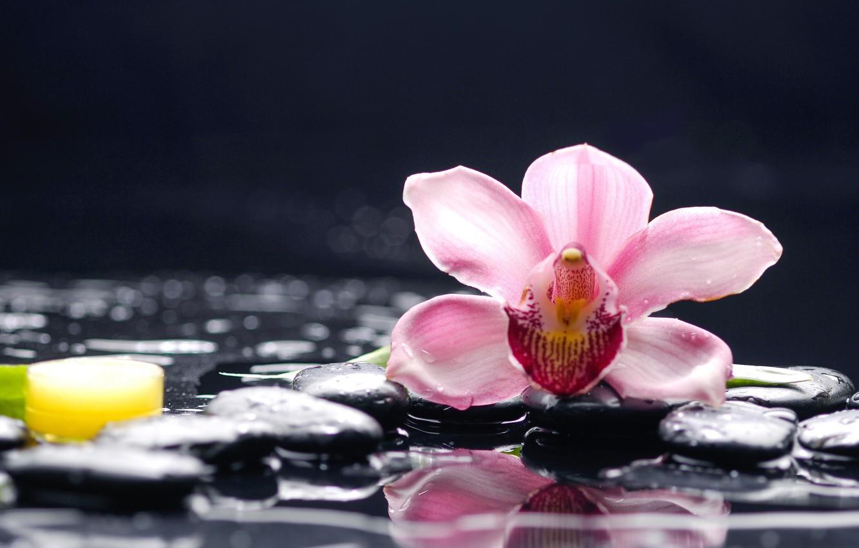 Photo wallpaper water, macro, flowers, stones, Orchid
