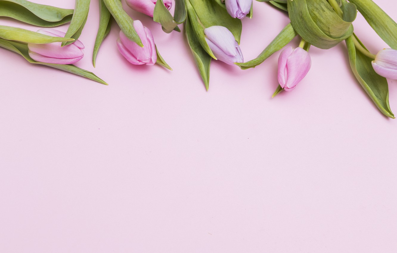 Photo wallpaper Flowers, Spring, Tulips, Background, Buds