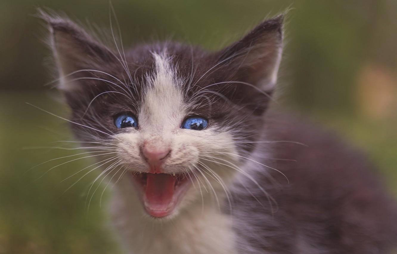 Photo wallpaper baby, muzzle, kitty, pisklya