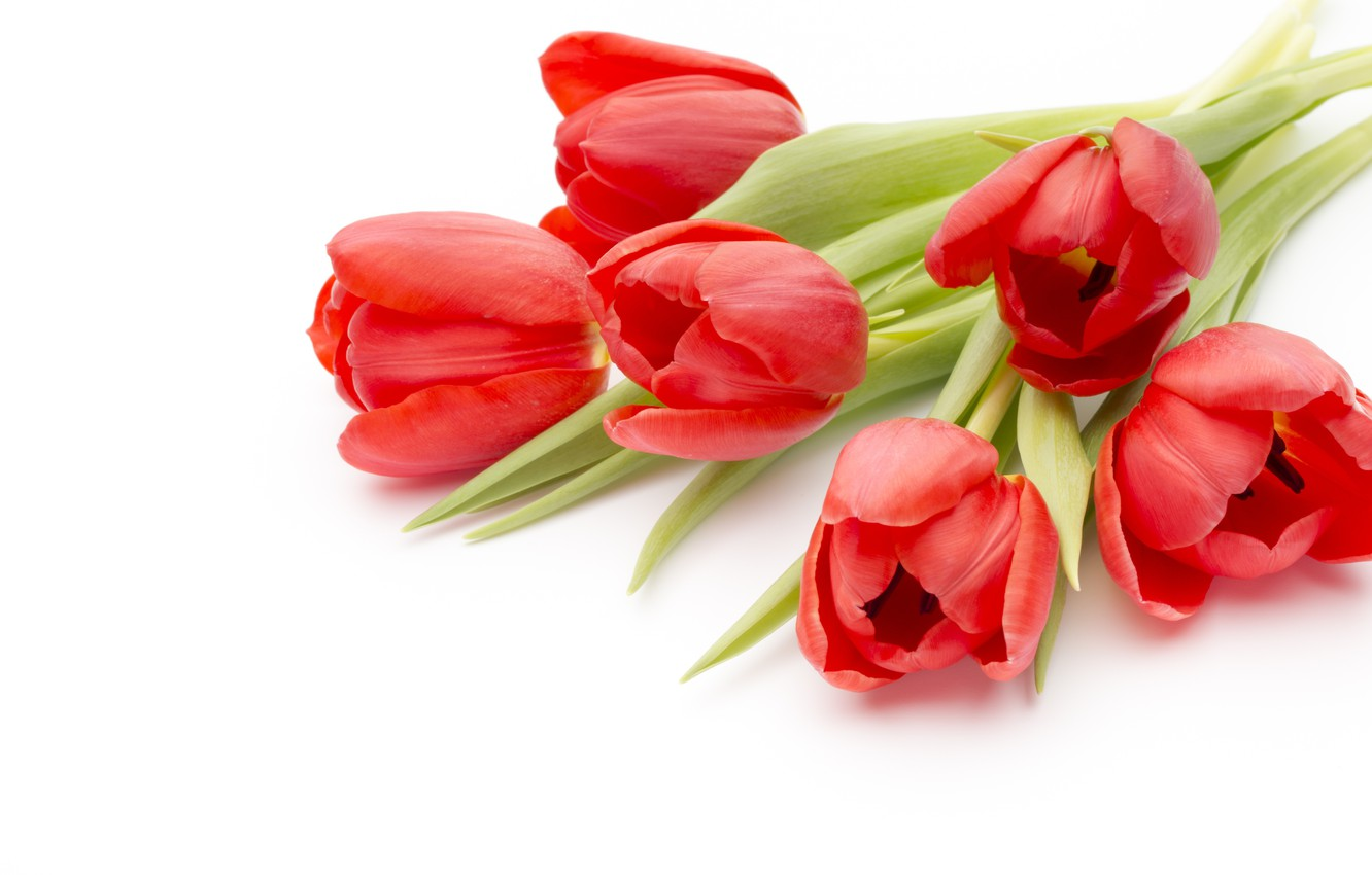 Photo wallpaper flowers, bouquet, red, fresh, pink, flowers, beautiful, romantic, tulips, red tulips
