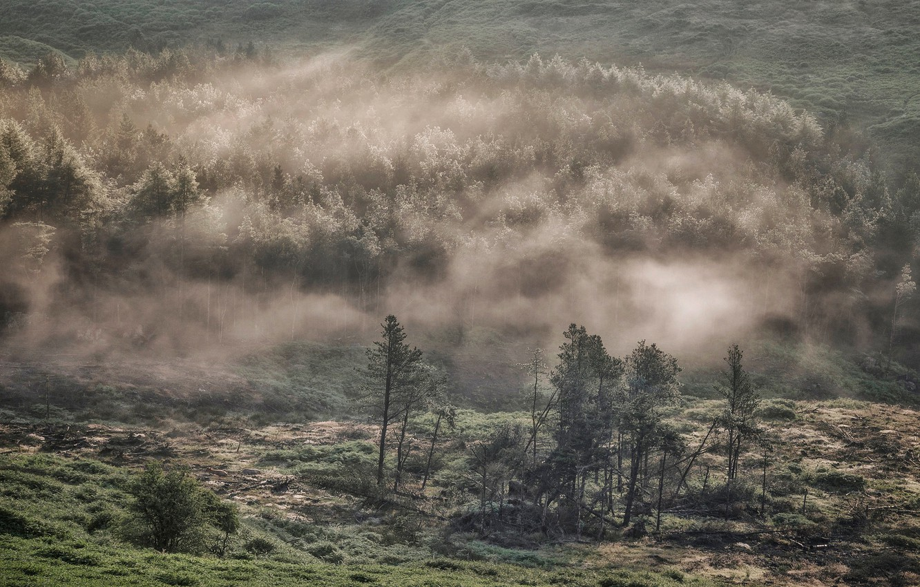 Photo wallpaper trees, fog, hills, England, Derbyshire