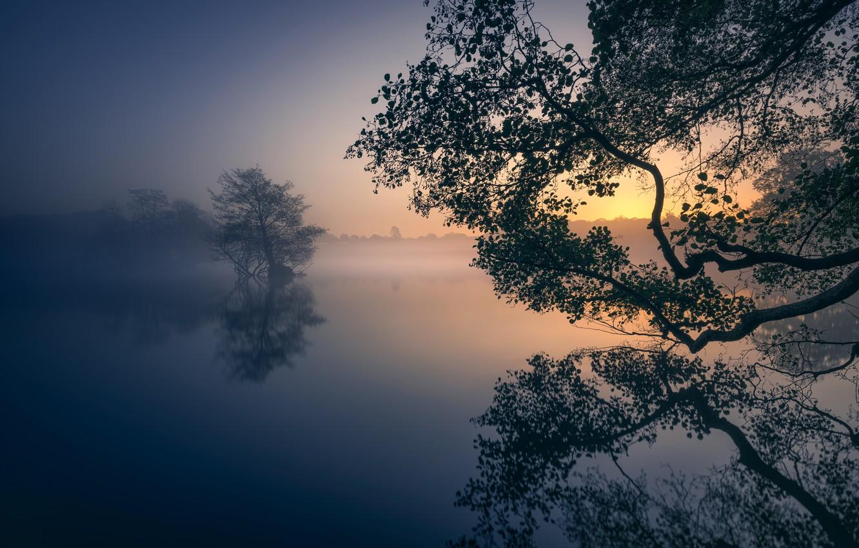 Photo wallpaper trees, fog, lake, Park, reflection, dawn, England, London, morning, London, England, Richmond Park, Richmond Park, …