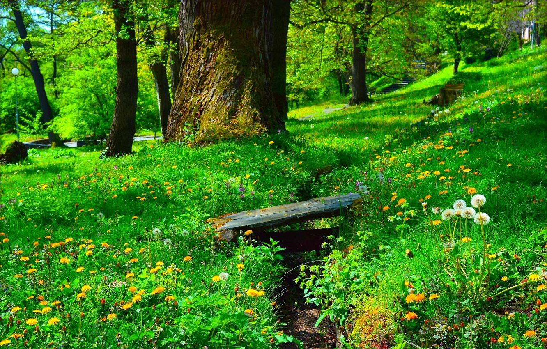 Photo wallpaper flowers, Park, Greens, Grass, Spring, dandelions, Grass, Green, Spring, Flowering, Flowering