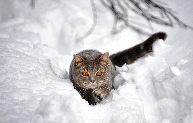 Photo wallpaper winter, cat, snow, the snow, bokeh