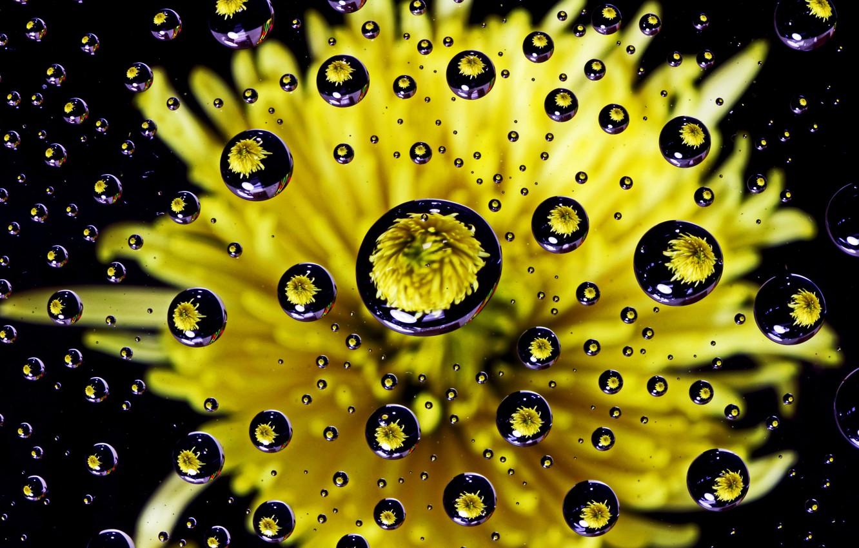 Photo wallpaper flower, water, drops, dandelion