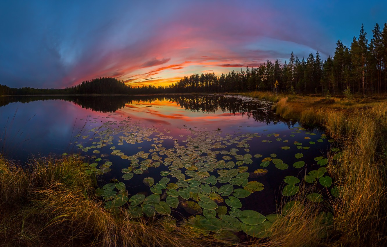 Photo wallpaper forest, sunset, lake, water lilies, Leningrad oblast
