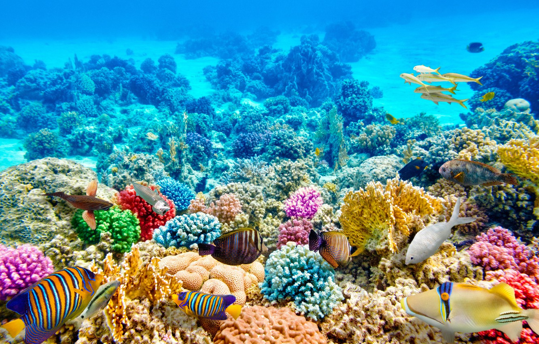 Photo wallpaper fish, blue, the bottom, corals, underwater world