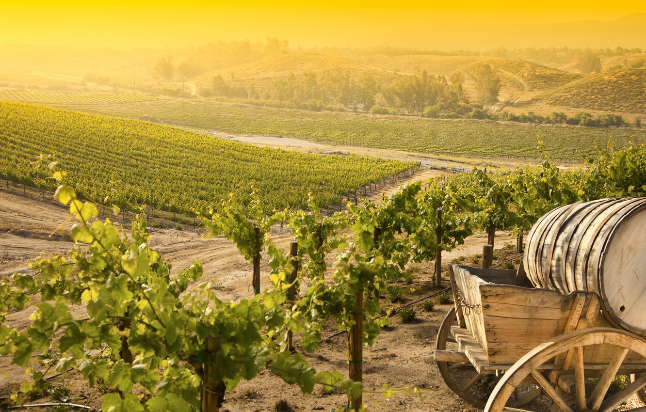 Photo wallpaper landscape, nature, vineyard, bunches of grapes