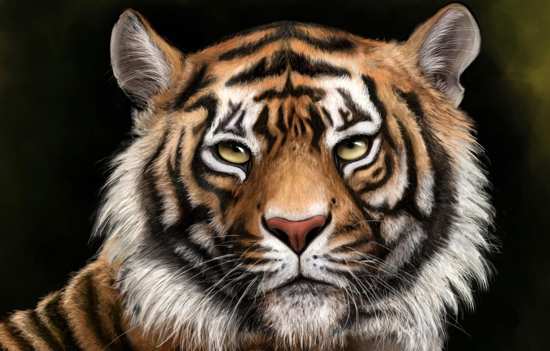 Photo wallpaper face, tiger, background, figure, predator, art