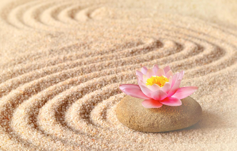 Photo wallpaper sand, flower, stone, Lotus