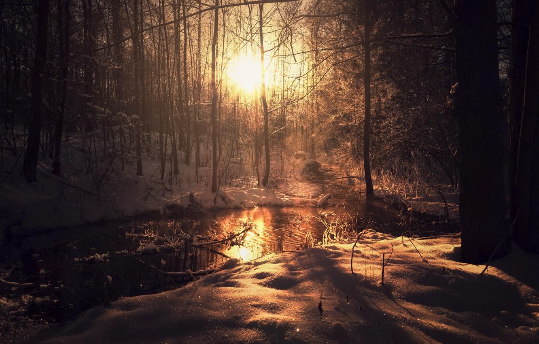 Photo wallpaper winter, forest, light