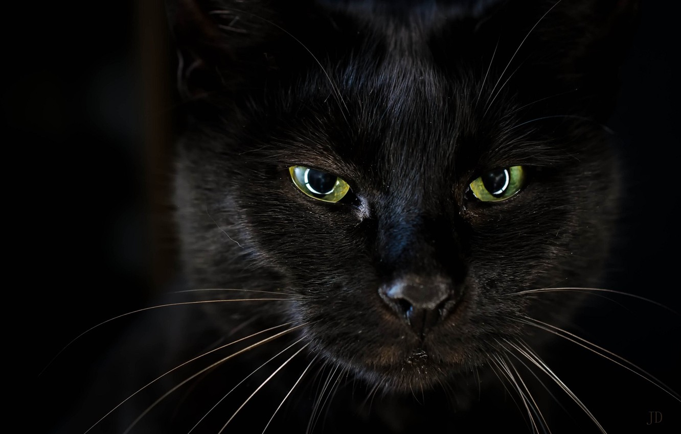 Wallpaper Black Look Cat Eyes Images For Desktop Section