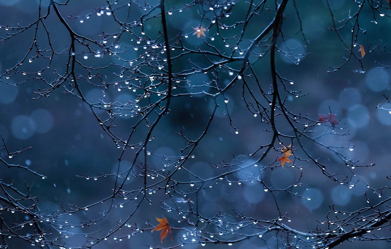 Photo wallpaper drops, macro, branches, foliage
