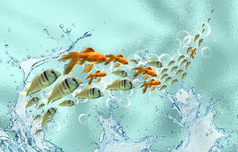 Photo wallpaper fish, mood, the Wallpapers