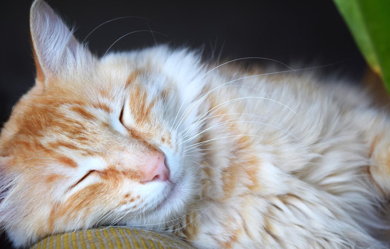 Photo wallpaper animals, cat, sleep, red