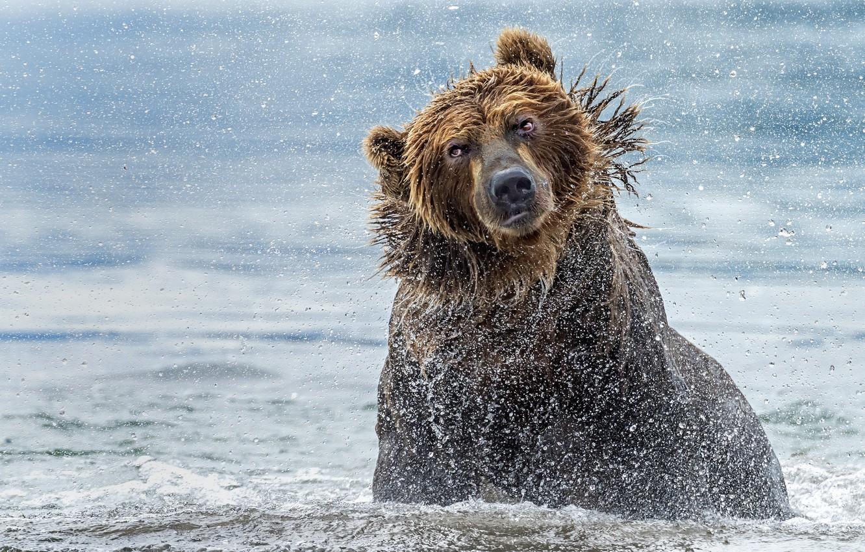 Photo wallpaper water, squirt, river, bear