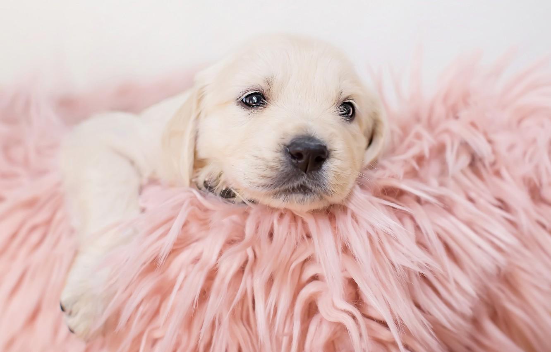Photo wallpaper baby, blanket, puppy
