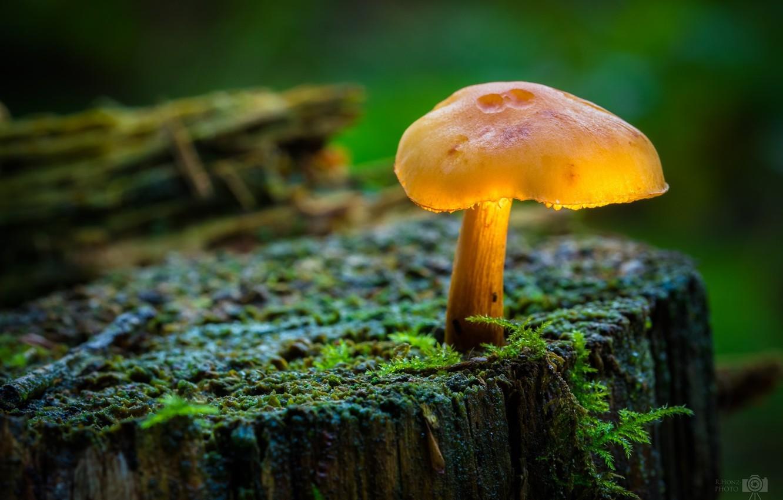 Photo wallpaper macro, mushroom, moss, stump