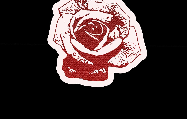 Photo wallpaper Wallpaper, rose, red rose, flower (flowers), the Wallpapers, rose of love, Rose love, 2100x2100 Wallpaper