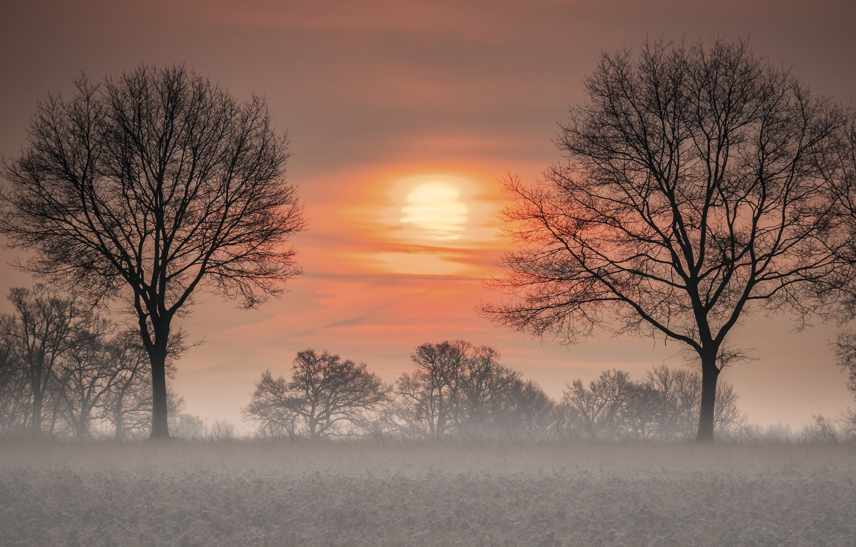 Photo wallpaper trees, sunset, fog