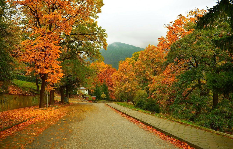 Photo wallpaper Road, Autumn, Trees, Mountain, Street, Fall, Foliage, Mountain, Autumn, Street, Colors, Leaves