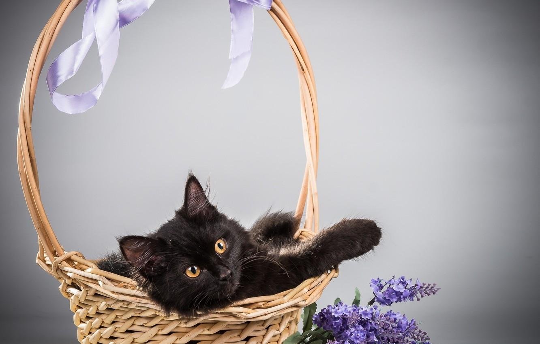 Photo wallpaper cat, cat, flowers, background, basket, lilac