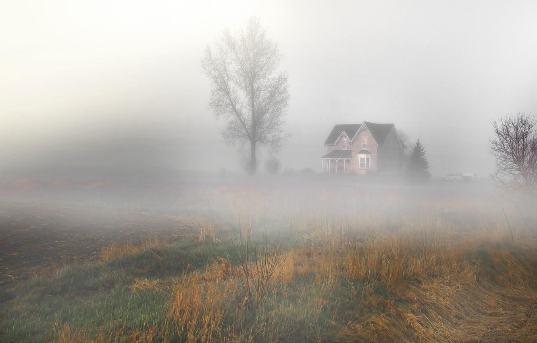 Photo wallpaper field, landscape, nature, fog, house, tree