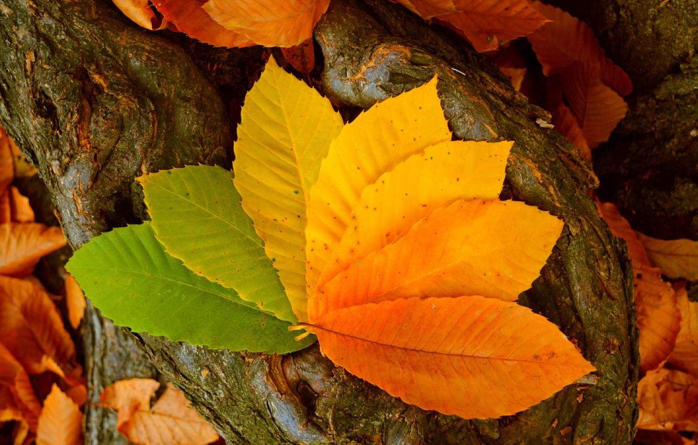Photo wallpaper Autumn, Leaves, Autumn, Colors, Leaves