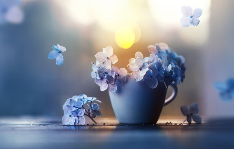 Photo wallpaper flowers, petals, Cup, hydrangea, Ashraful Arefin