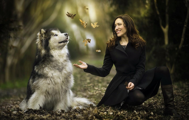 Photo wallpaper leaves, girl, each, dog, Malamute