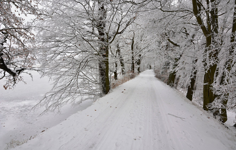 Photo wallpaper winter, road, snow, trees