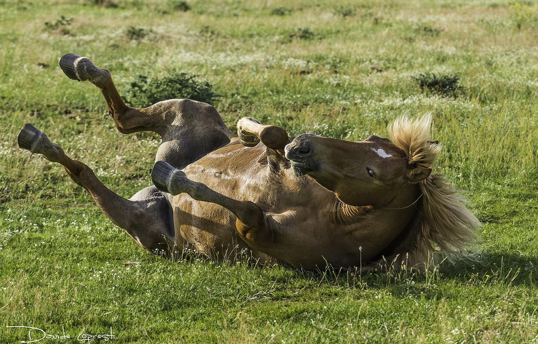 Photo wallpaper grass, horse, mane, hooves
