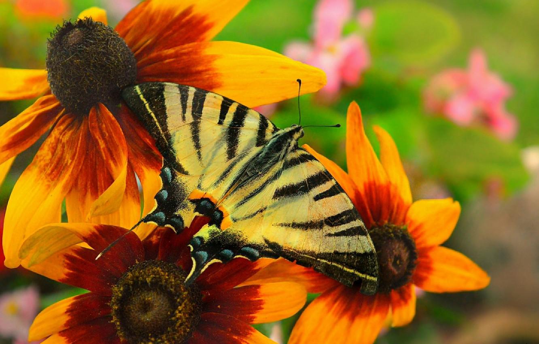 Photo wallpaper Macro, Flowers, Butterfly, Flowers, Macro, Butterfly
