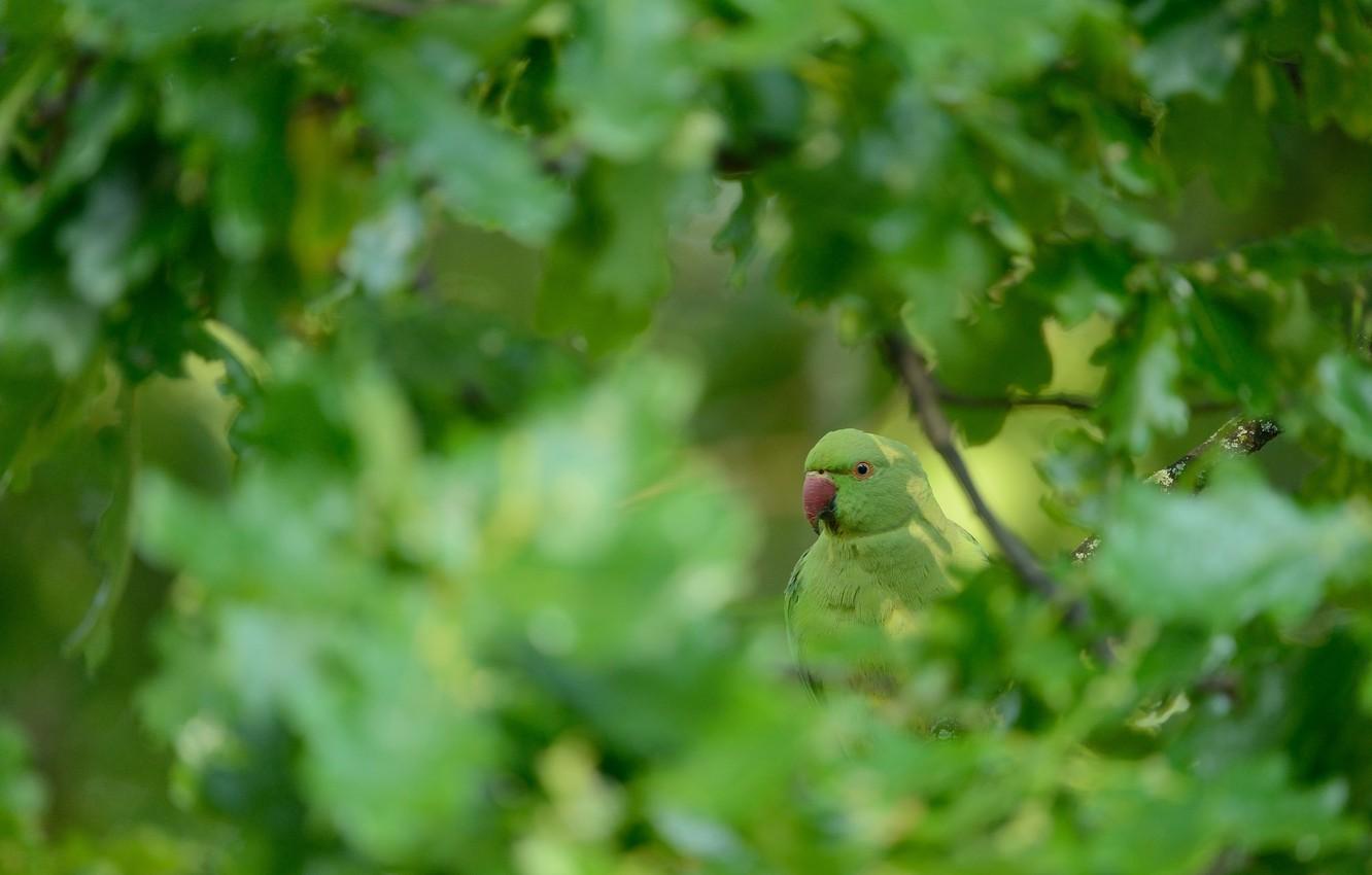Photo wallpaper nature, tree, bird, parrot