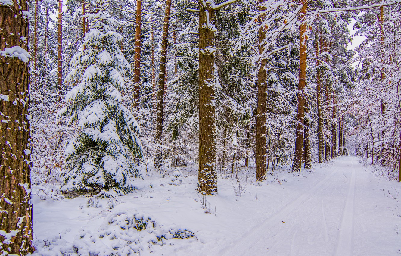 Photo wallpaper winter, road, forest, snow