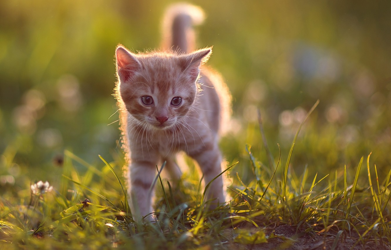 Photo wallpaper grass, baby, red, kitty, bokeh