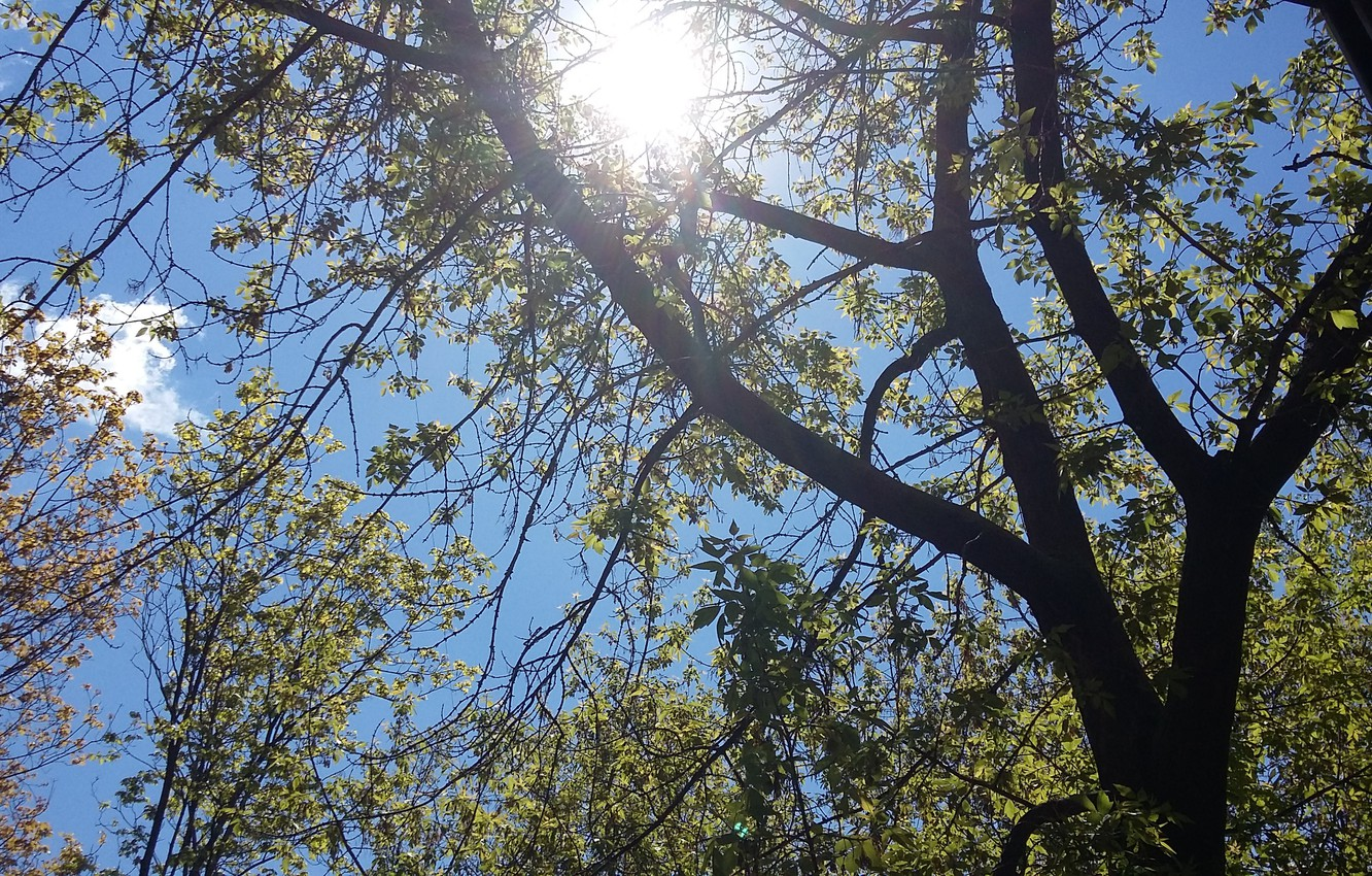 Photo wallpaper the sky, the sun, light, branches, tree, cloud, the view from the window, grace, spring …